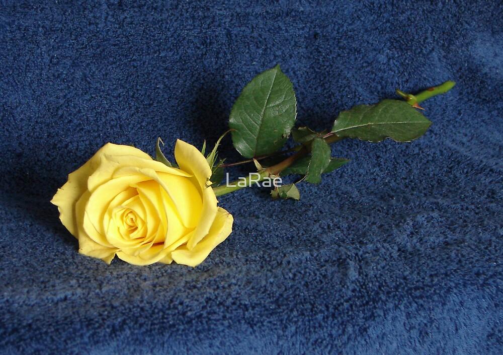 Yellow Rose by LaRae