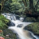 The Golitha Falls by Anthony Hedger Photography