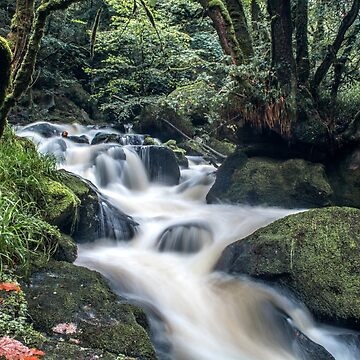 The Golitha Falls by anthonyhedger