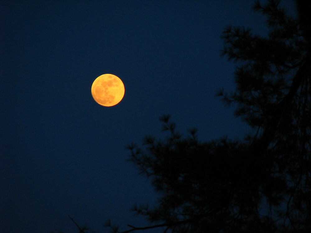 Moon and Pine by JohnEvans