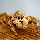 Portrait of a Spider by Evan Ludes