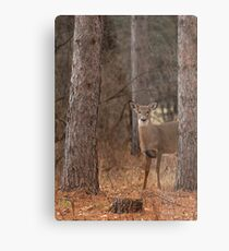 White-tailed deer in the forest Metal Print