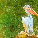 Once Upon A Time There Was A Pelican..... by EvaMarIza