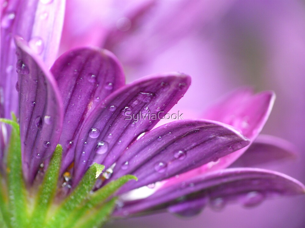 whole lotta purple going on by SylviaCook