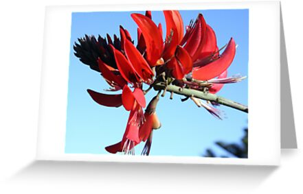 Flower of Flames by Lesley  Hill