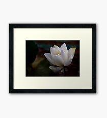 The White Beauty Framed Print