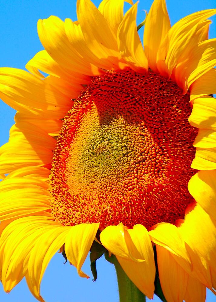 Big Sun by Cynde143