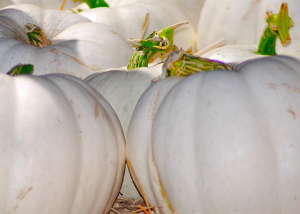 White Pumpkins by Cynde143