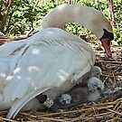 Safe And Sound Under Mother's Care by lynn carter
