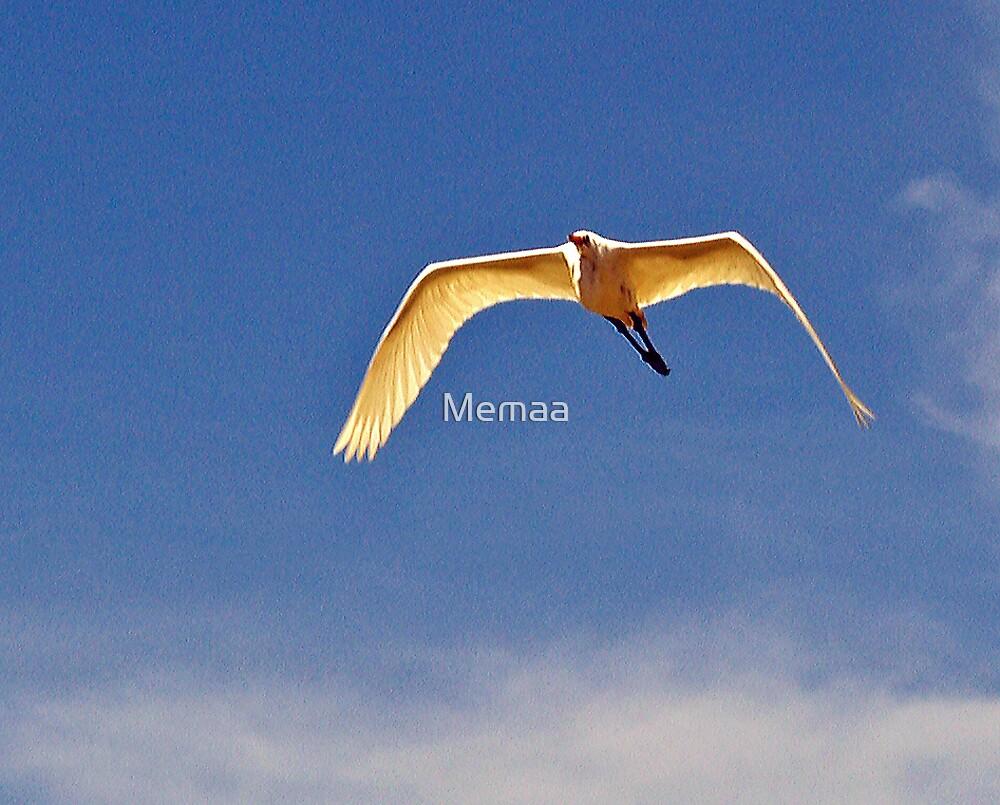 Egret in Flight by Memaa