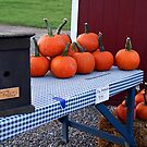 Pie Pumpkins by BigD