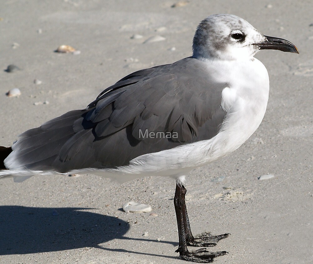 Sea Gull In the Morning by Memaa