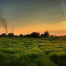 grass and smoke  by Jon Baxter