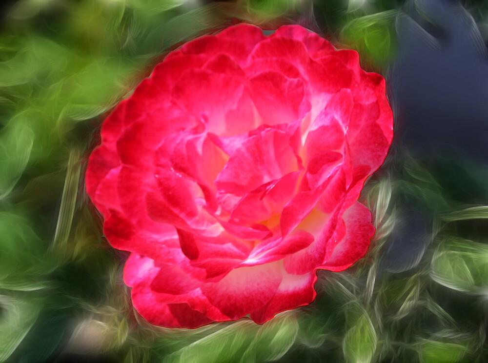 Rose Beauty  by shadyuk