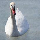 White Swan on Grunge by Rosalie Scanlon