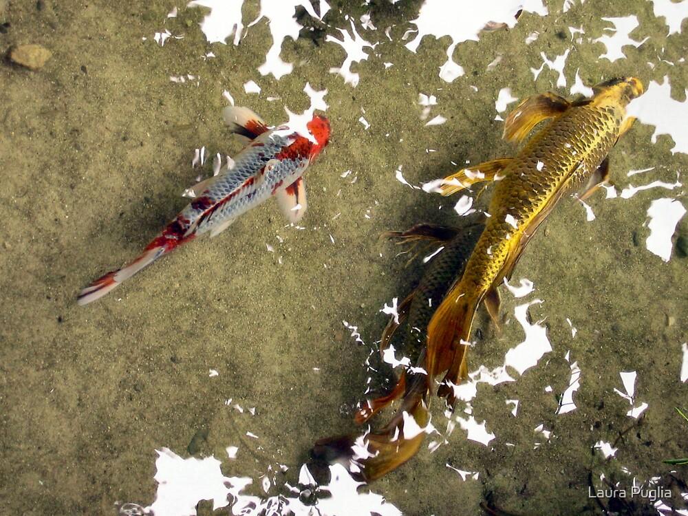 Gold Fish by Laura Puglia