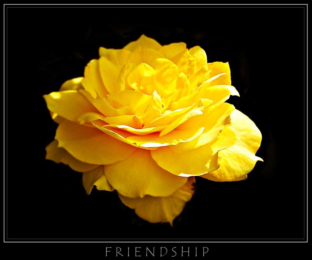 Friendship by bluejay