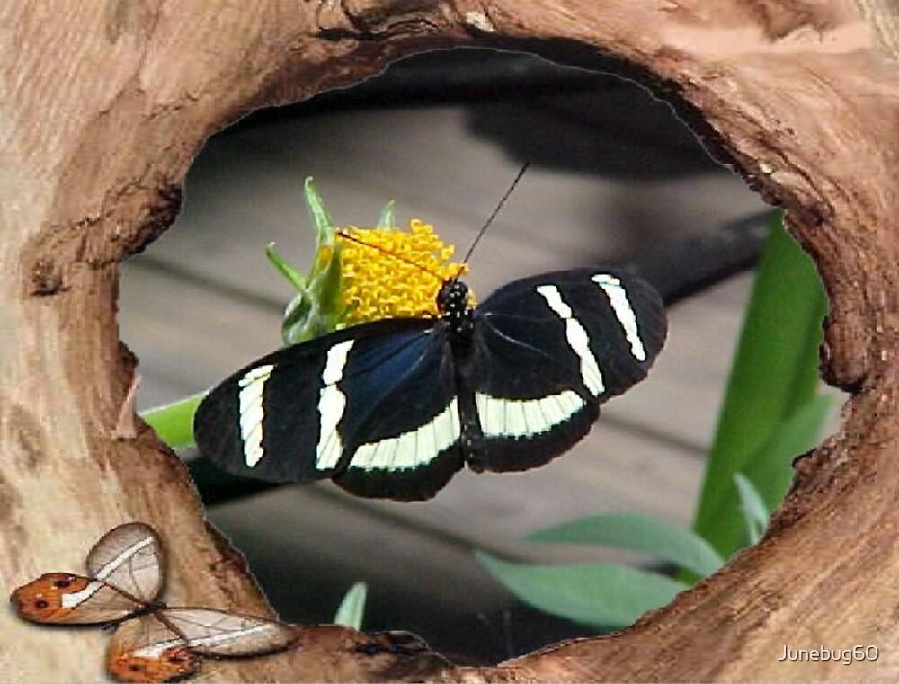 Savoring the Nectar by Junebug60