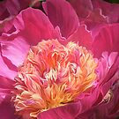 Peony - Flower Of Desire by Carol  Cavalaris