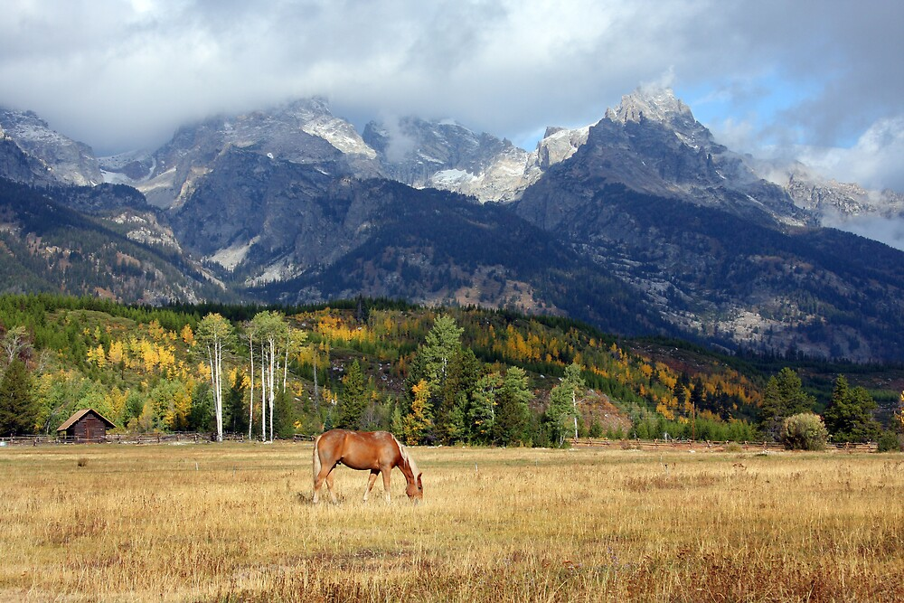 Teton Pasture by noffi