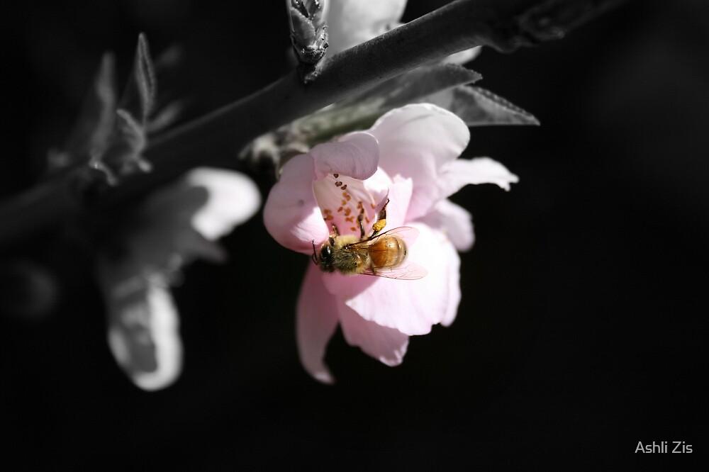 Bee Bee by Ashli Zis