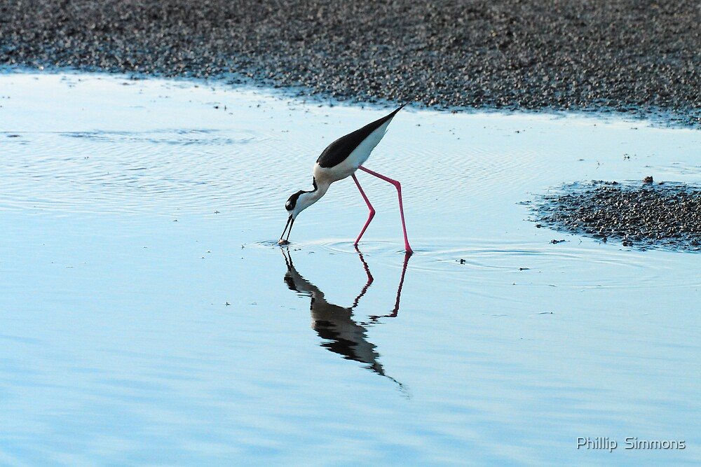 Graceful Feeder II by Phillip  Simmons