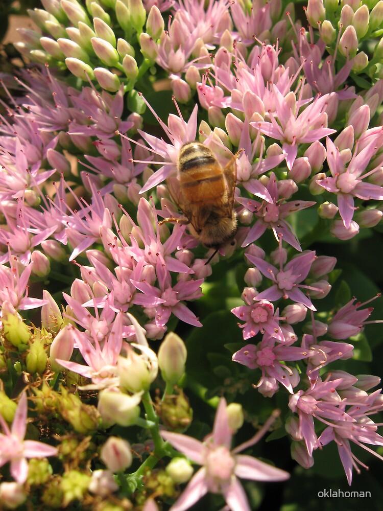 Bee Bouquet by oklahoman
