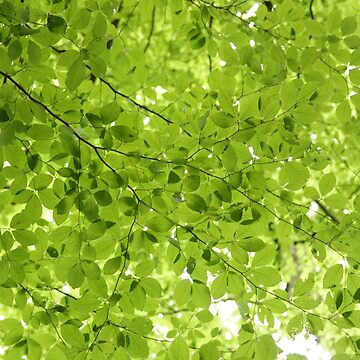 Leaves - JUSTART (c) by JUSTART