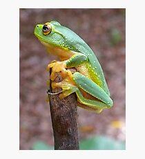 Tree Frog Fotodruck