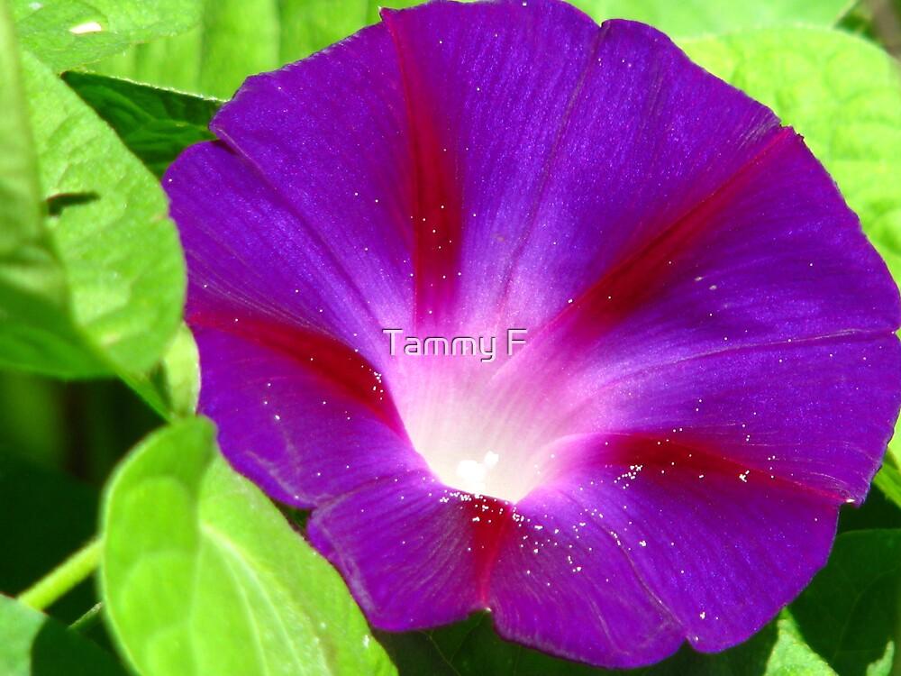 Purple Glory by Tammy F