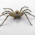 Beware the Arachnophobe by elsha