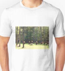 The harem T-Shirt