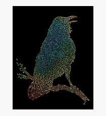The Iridescent Raven Photographic Print