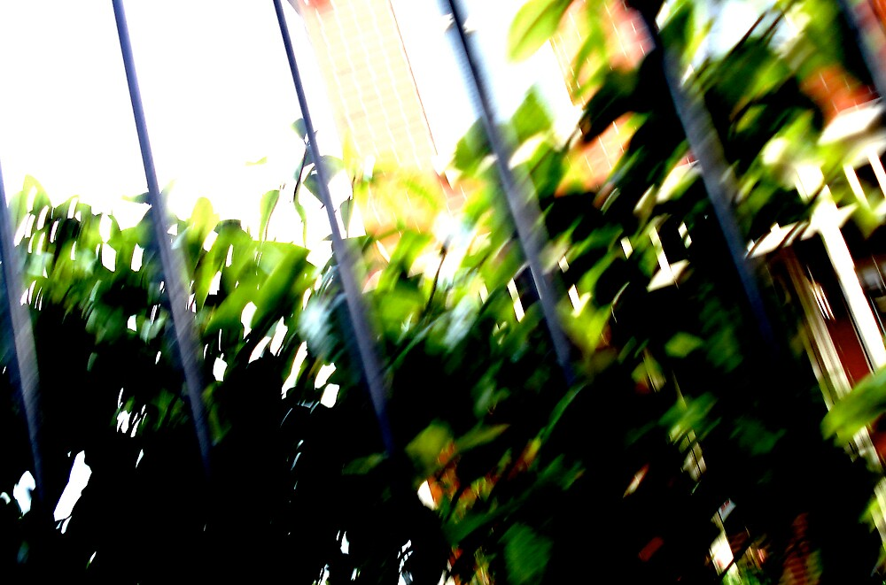leaves on bars by canyouseeit