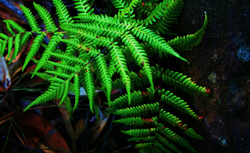 fern by Matthew  Smith