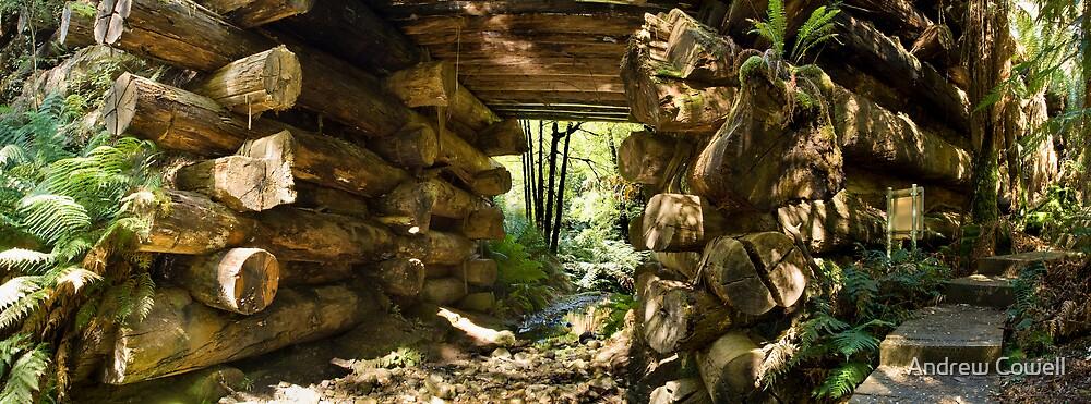 log bridge by Andrew Cowell