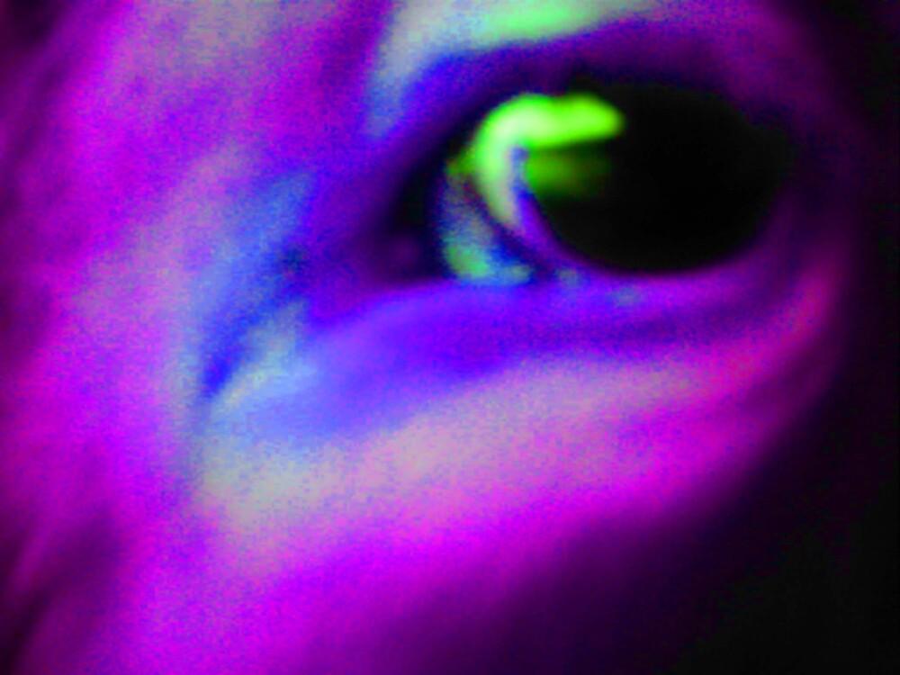 Eye to Eye 2 by wysiwyg