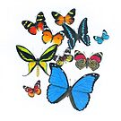 Grouping of Colorful Butterflies by amydaggett