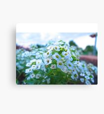 Macro Flowers Canvas Print