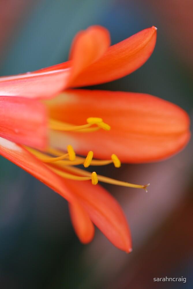 Orange Trumpet by sarahncraig