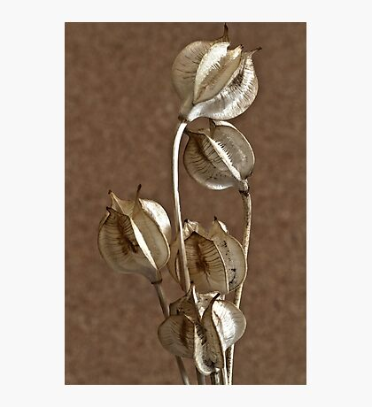 Seed Pods Macro Photographic Print