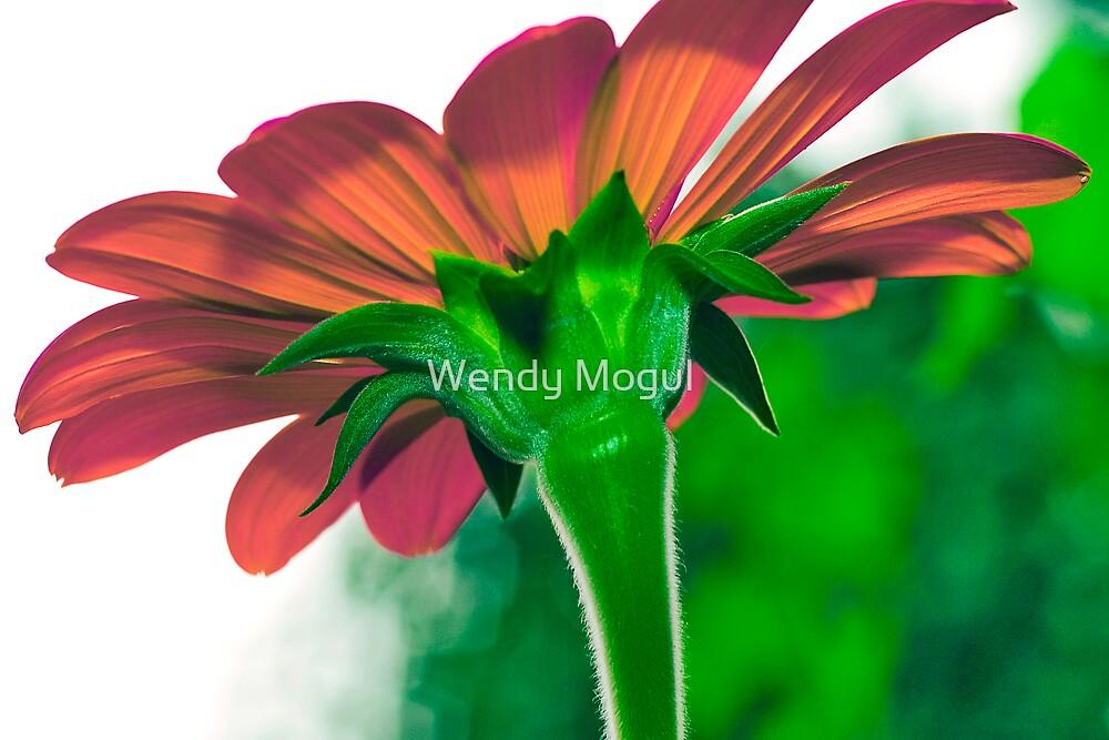 Sweet Gerbera by Wendy Mogul