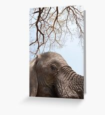 Appreciate Elephants Greeting Card
