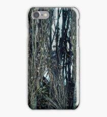 Poplar Trees iPhone Case/Skin