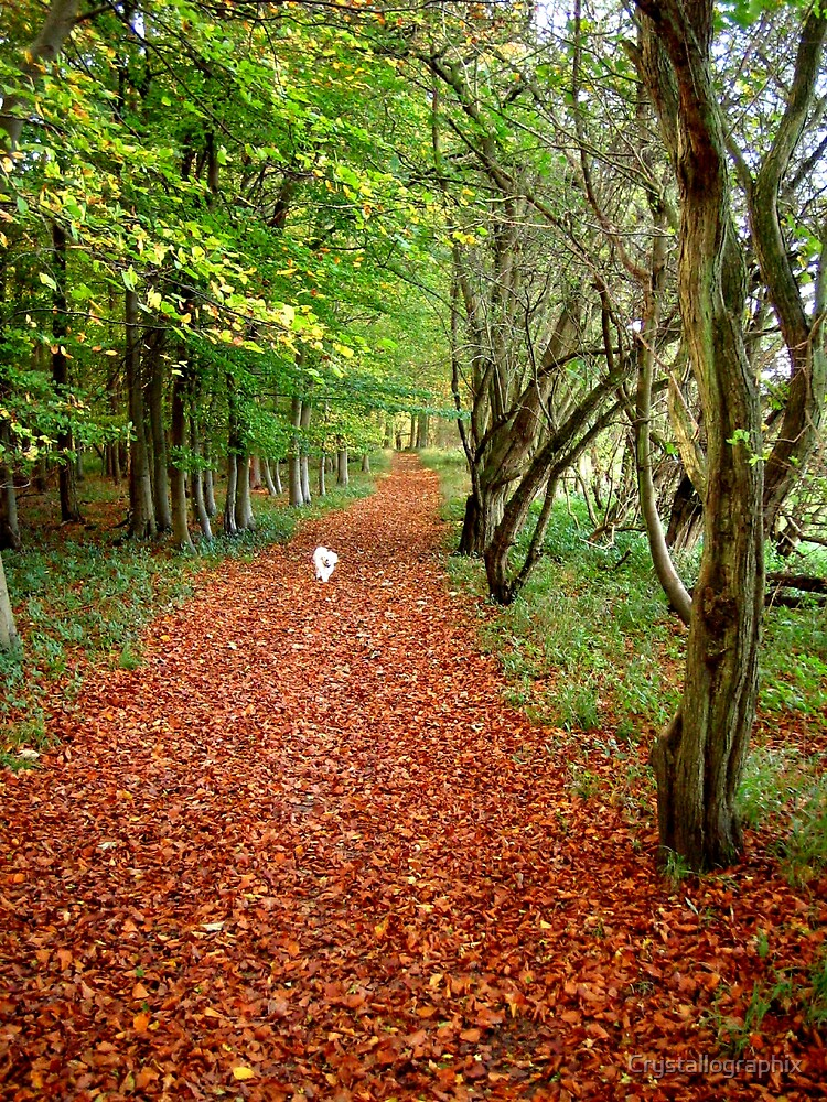 Memories of Suffolk - Autumn Leaves by Crystallographix