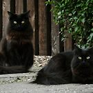 Two Black Cats. by Forfarlass
