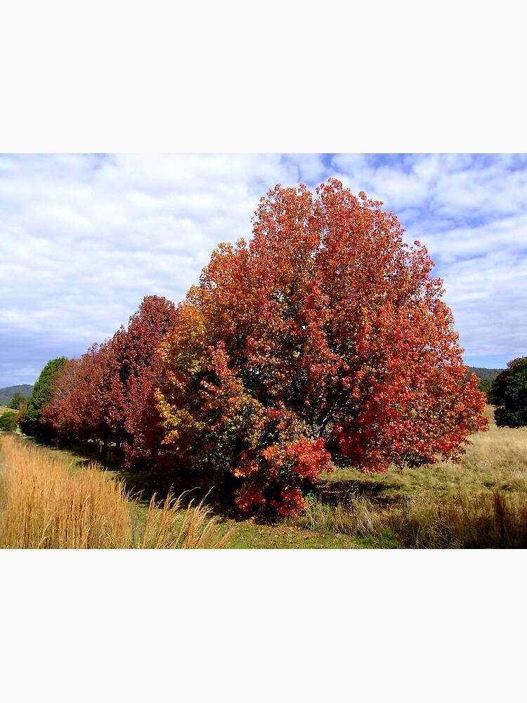 Autumn Trees by theoddshot