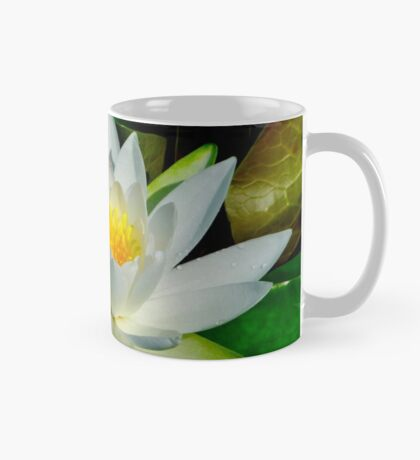 White Water Lily and Bud on Lily Pad Mug