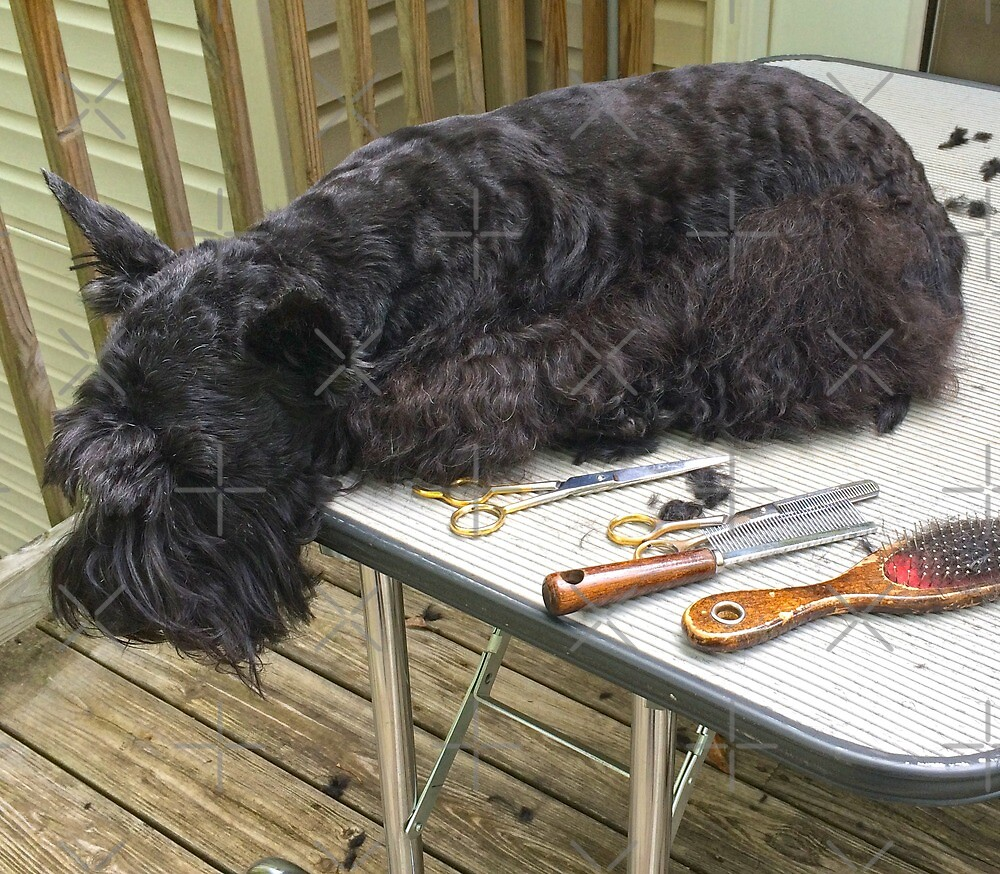 Jack at the Beauty Parlor by Beth A.  Richardson