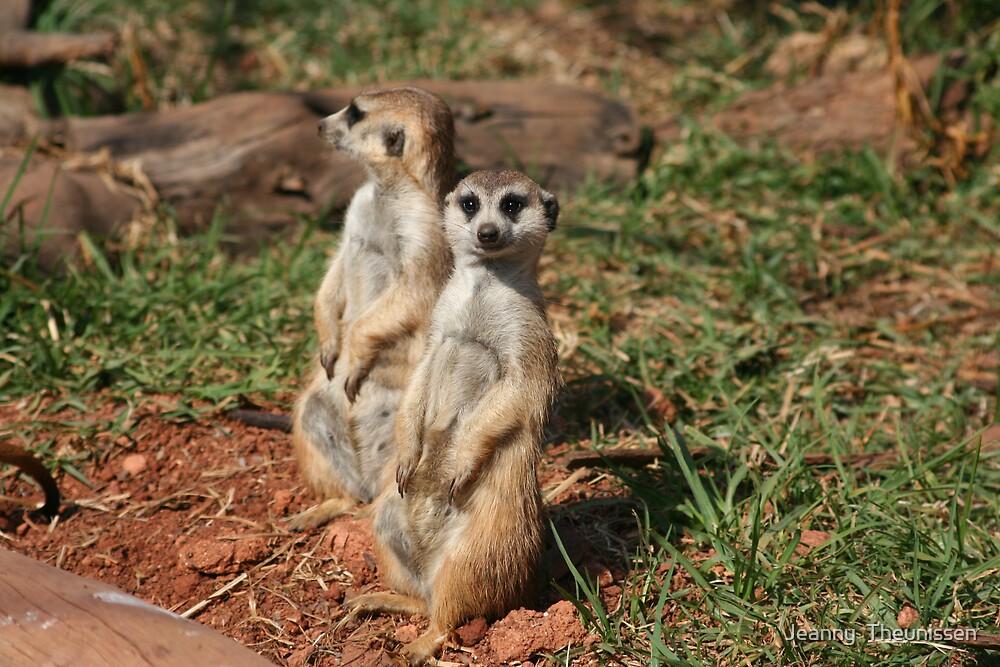 Meerkat by Jeanny  Theunissen